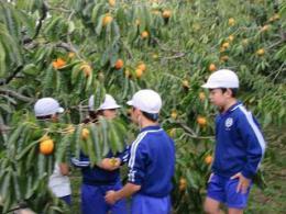 10.25柿農家 (2).JPG