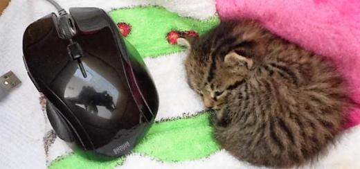 5.29マウスと猫.jpg
