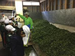茶工場4.jpg