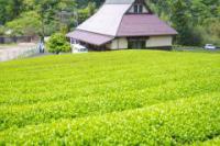 茶畑と唐川館.jpg